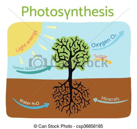 Respiration And Photosynthesis Cycle Biology Essay